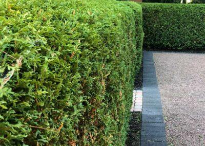 Garden Trimming 03